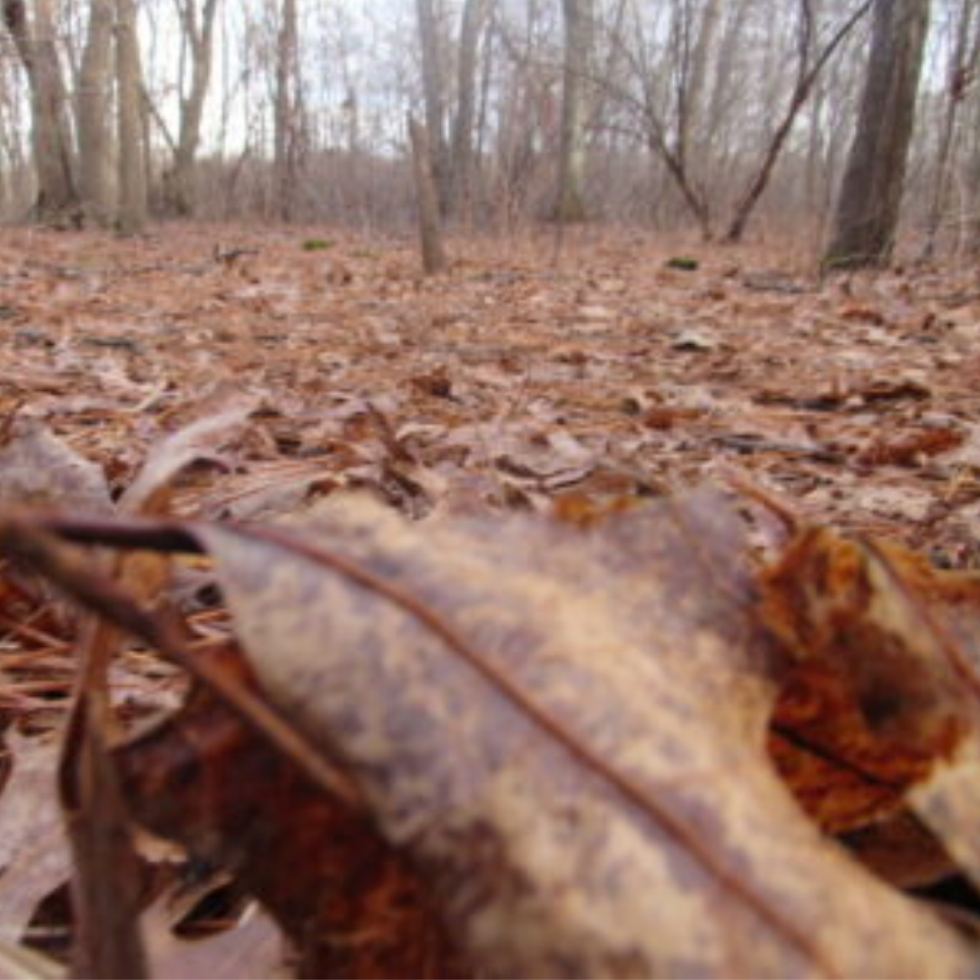 massapequa preserve trail fall